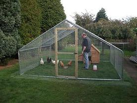 Chicken Safe Predator Proof Metal Walk In Chicken Runs